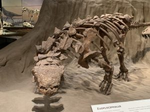 Royal Tyrrell Museum Canada